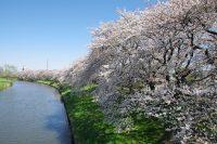 ひとあし先に桜前線!